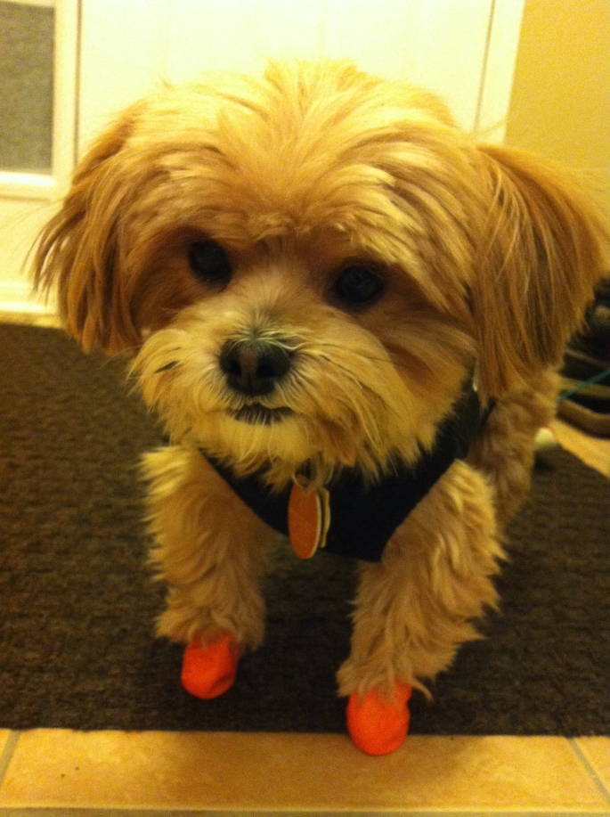 Do These Boots Make My Paws Look Big?